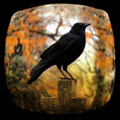 Gothic Fish Eye Print by Gothicrow Images