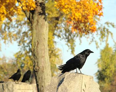 Three Ravens On A Gothic Graveyard Day Art Print by Gothicrow Images