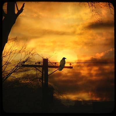 Crow Silhouette Photograph - Gothic Sunset by Gothicrow Images
