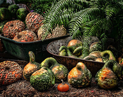 Photograph - Gourds					 by David and Carol Kelly