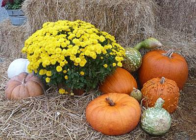 Photograph - Gourds And Mums by Pete Trenholm
