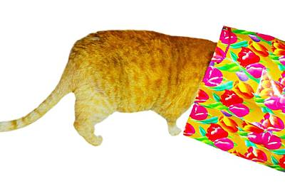 Orange Tabby Photograph - Grab Bag by Diana Angstadt