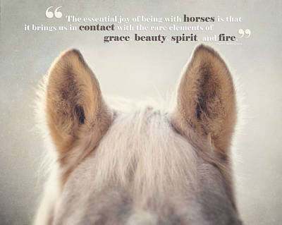 Horse Ears Photograph - Grace And Beauty by Lisa Russo