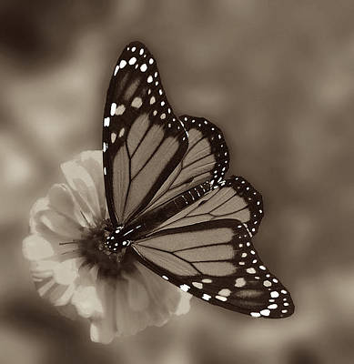 Butterfly Flowers Photograph - Grace by Don Spenner