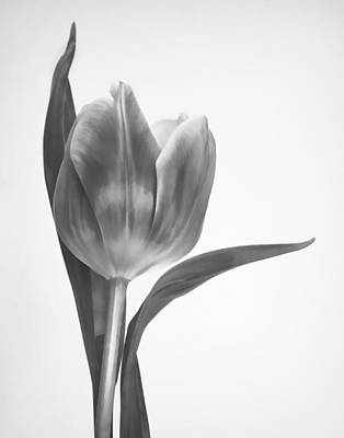 Photograph - Grace In Black And White by David and Carol Kelly