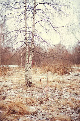 Soul Healing Photograph - Grace In The Snow. Winter Poems by Jenny Rainbow