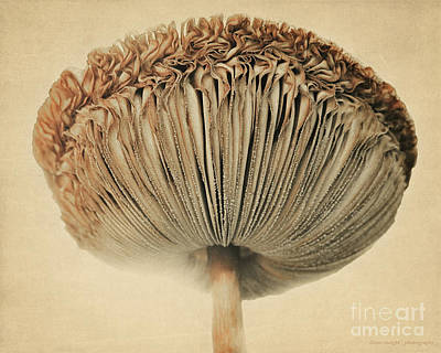 Photograph - Grace Under Mushroom by Diane Enright