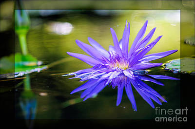 Nature Photograph - Graceful Divinity by Charles Dobbs