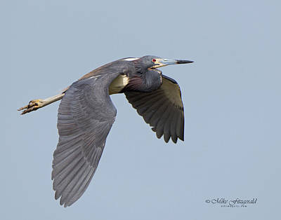 Photograph - Graceful Flight by Mike Fitzgerald