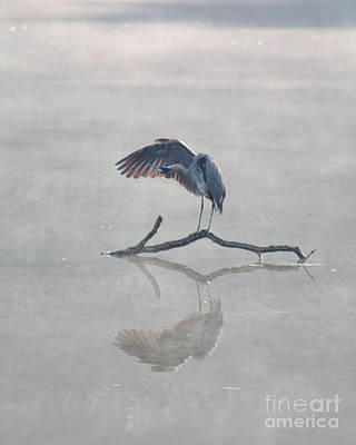 Art Print featuring the photograph Graceful Heron by Anita Oakley