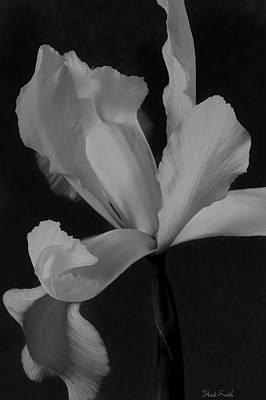 Photograph - Graceful In Monochrome  by Heidi Smith