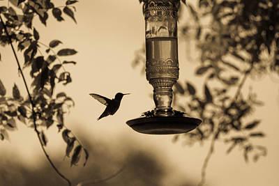 Photograph - Graceful by Haren Images- Kriss Haren