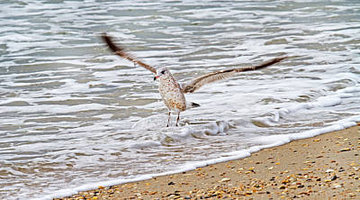 Gull Wall Art - Photograph - Graceful Landing by Betsy Knapp