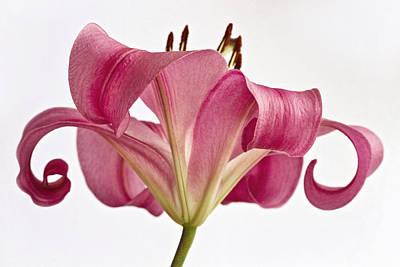 Graceful Lily Art Print