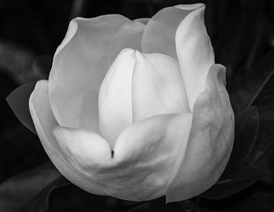 Photograph - Graceful Opening by Bonnie Leigh Delar