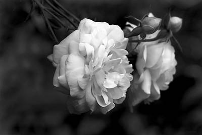 Photograph - Graceful Roses Black And White by Jennie Marie Schell