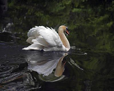 Photograph - Graceful Swan by Elsa Marie Santoro