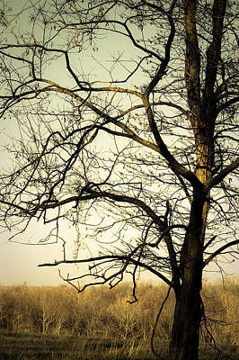 Photograph - Graceful Tree by Cara Moulds