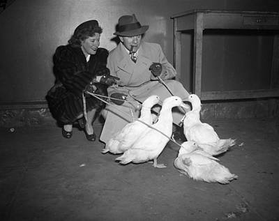 White Duck Photograph - Gracie Allen And George Burns Playing With Ducks by Retro Images Archive