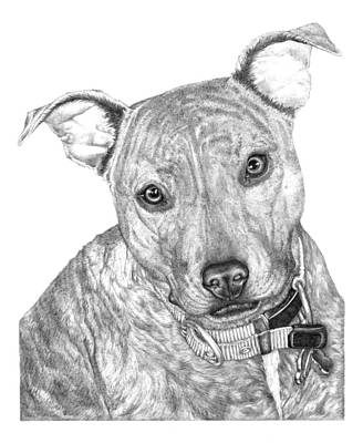 Brindle Drawing - Gracie by Deanna Maxwell