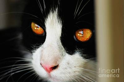 Photograph - Gracie's Eyes by Phillip Garcia