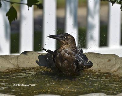 Achieving - Grackle in the Bird Bath 2 by Allen Sheffield