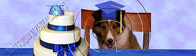 Diploma Digital Art - Graduation Sheltie Puppy # 538 by Jeanette K