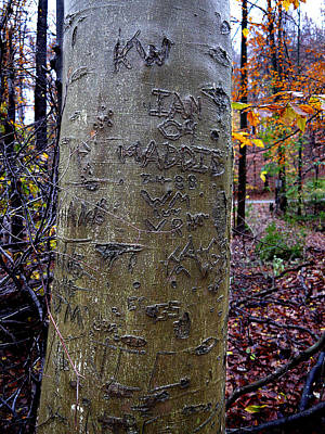 Photograph - Graffitree by Richard Reeve