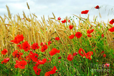 Grain And Poppy Field Art Print by Elena Elisseeva