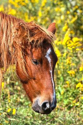 Photograph - Grazing Outer Banks Pony by Adam Jewell