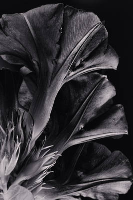 Photograph - Gramophone by Edgar Laureano
