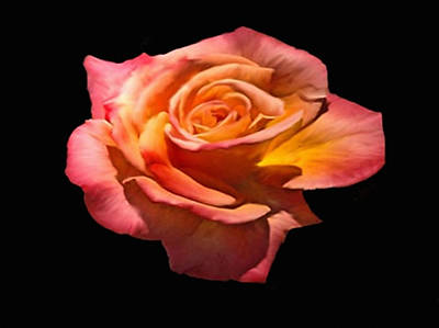 Painting - Granada Tea Rose by Dennis Buckman