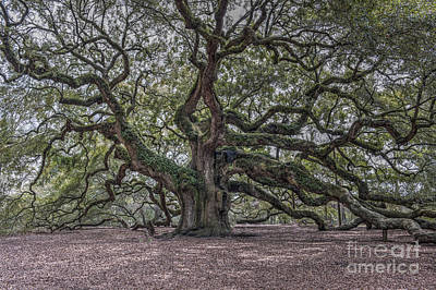 Photograph - Grand Angel Oak Tree by Dale Powell