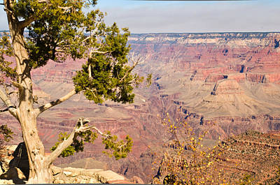 Grand Canyon 31 Art Print by Douglas Barnett