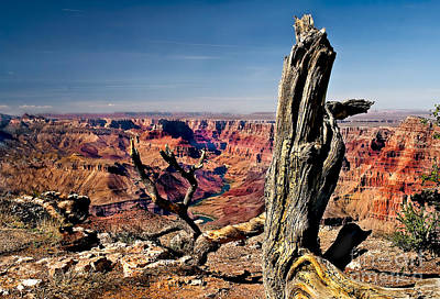 Photograph - Grand Canyon And Old Tree by Robert Bales