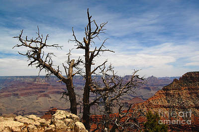 Photograph - Grand Canyon And Lone Tree by Debra Thompson