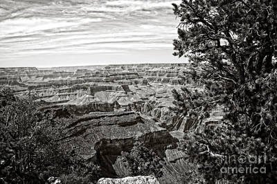 Photograph - Grand Canyon Black And White by Lee Craig