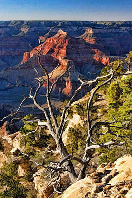 Painting - Grand Canyon Branches by Christopher Arndt