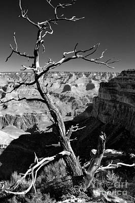 Grand Canyon Bw Art Print