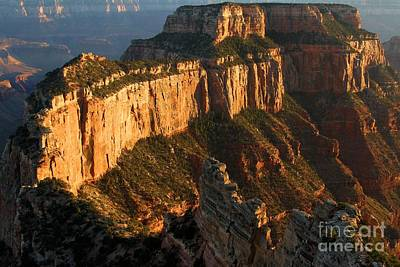 Photograph - Grand Canyon Cape Royal by Adam Jewell