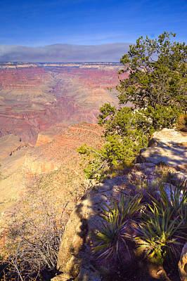 Grand Canyon Cliff Art Print by Douglas Barnett