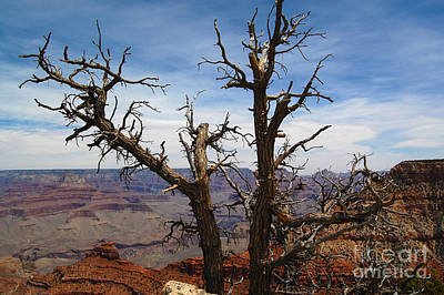 Photograph - Grand Canyon Dead Tree by Debra Thompson