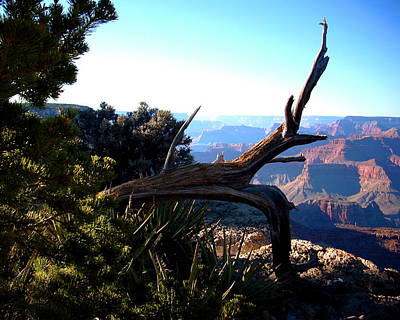 Photograph - Grand Canyon Dead Tree by Matt Harang