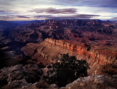 Grand Canyon Golden Ridgeback Art Print