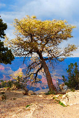 Digital Art - Grand Canyon National Park And Tree by Eva Kaufman