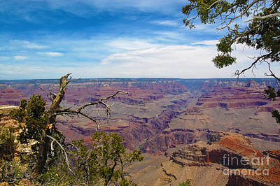 Photograph - Grand Canyon National Park by Debra Thompson