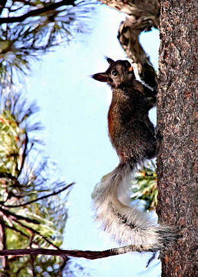 Painting - Grand Canyon National Park Kaibab Squirrel by Bob and Nadine Johnston