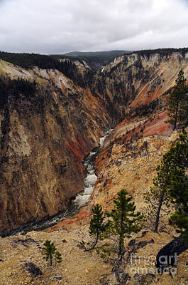 Photograph - Grand Canyon Of The Yellowstone by Cindy Murphy - NightVisions