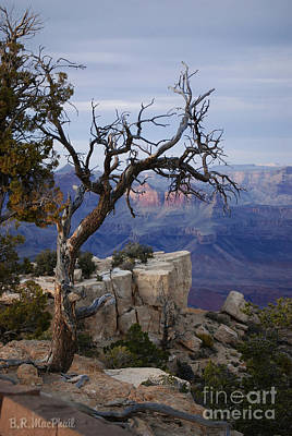 Grand Canyon Overlook Art Print by Barbara R MacPhail
