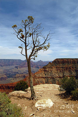 Photograph - Grand Canyon Rim View by Debra Thompson
